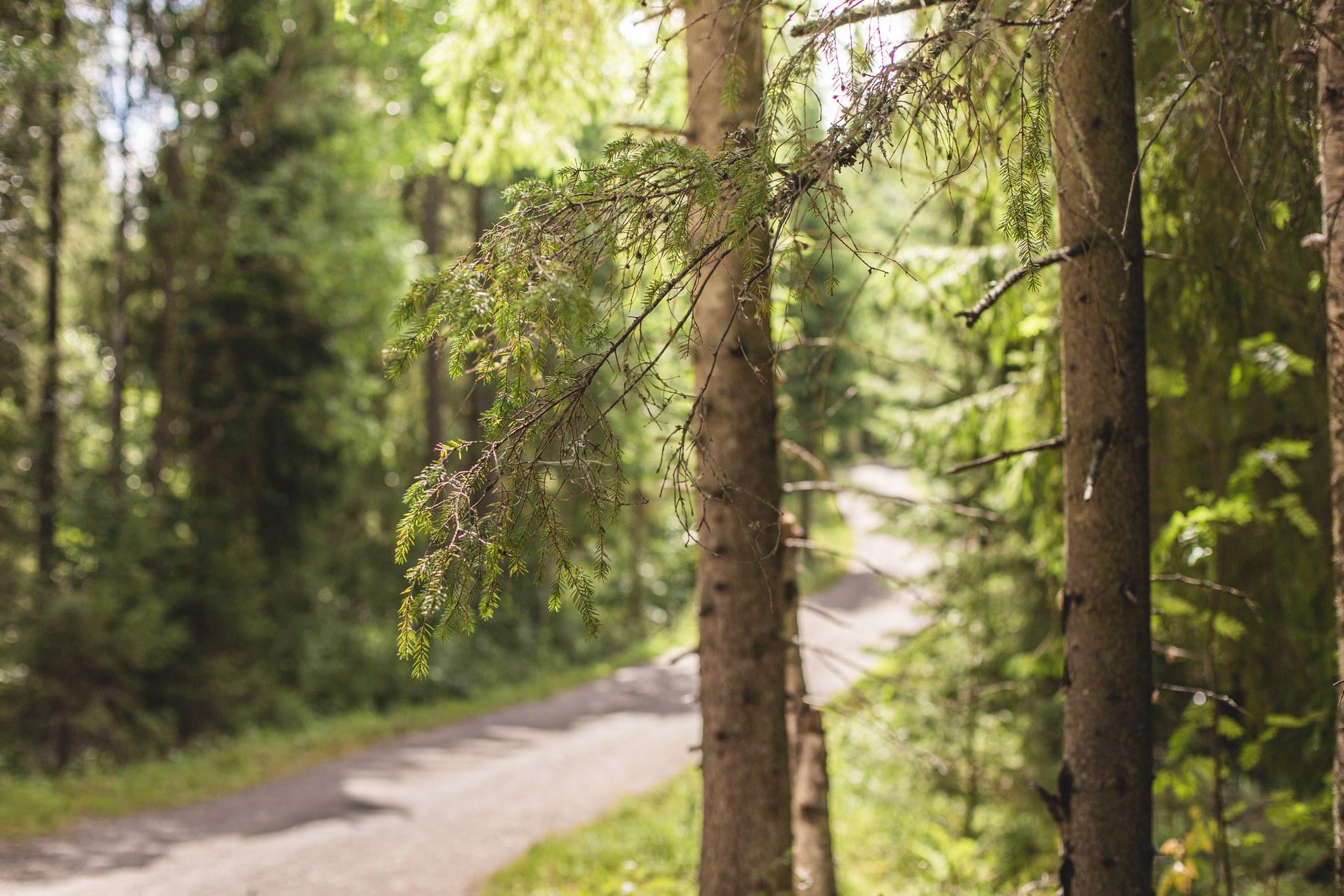 Luontopolku Soukonvuoren metsässä
