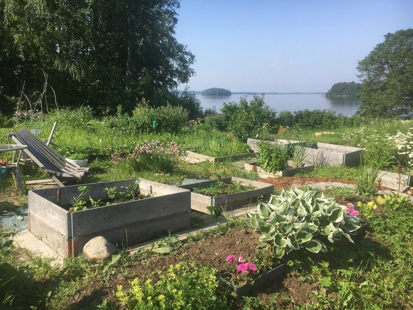 Palstaviljelmä, kasvatuslaatikoita, vehreän kesäinen maisema.