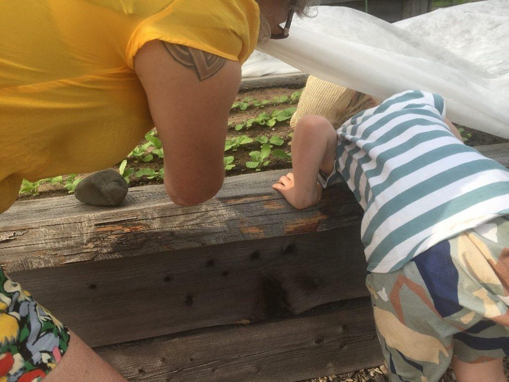 Lapsi tutkii viljelyksiä.